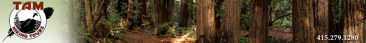Mt Tam Hiking Tours